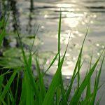 Paulo Coelho, ser como el río que fluye (video + artículo)