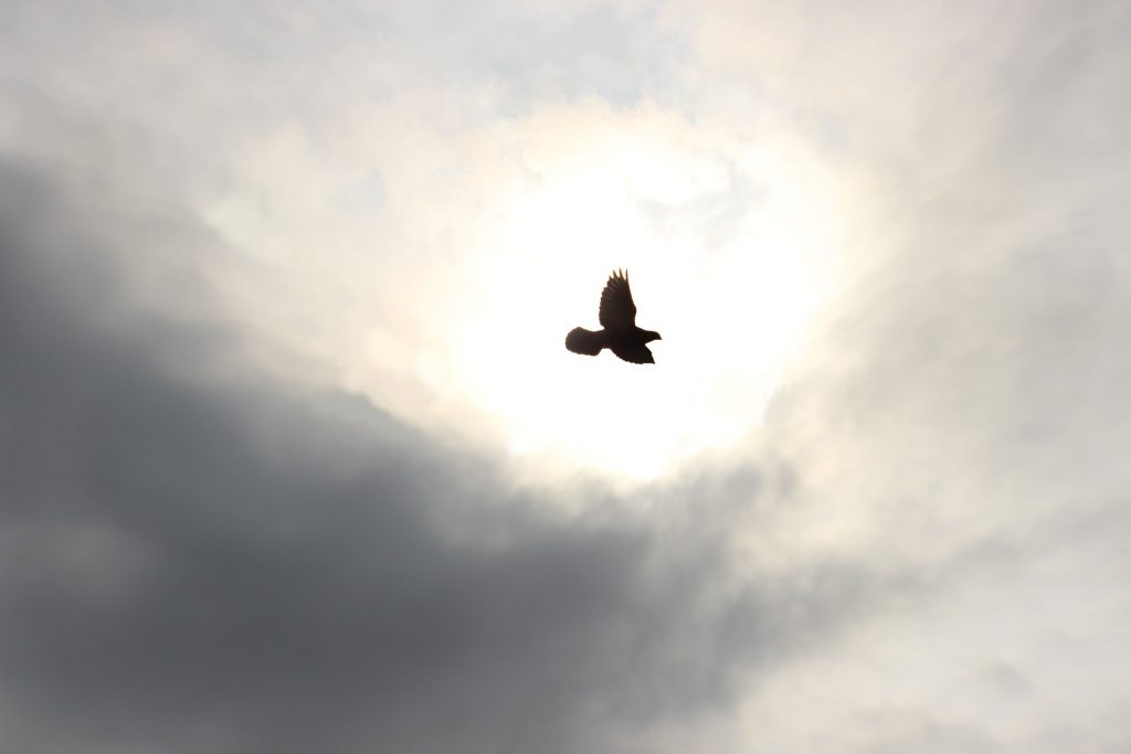 Dyer Pato o águila, tú decides...