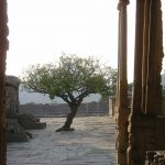 El empuje vital de un niño (El árbol indio)