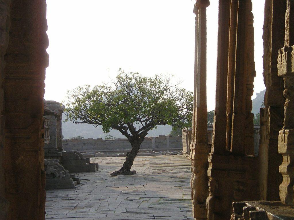 La fuerza de un niño con empuje vital (El árbol indio)