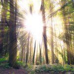 Encontrar sentido a tu vida: 10 preguntas para contestarte