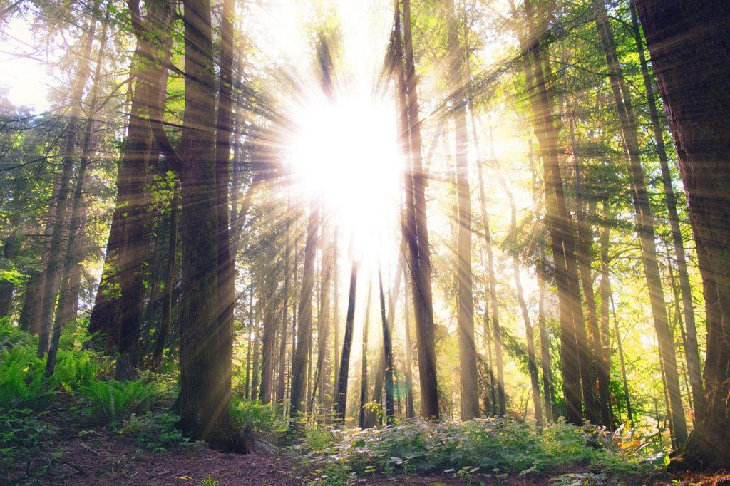 10 preguntas para encontrar sentido a tu vida