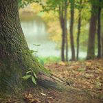 Abrazar árboles da energía. Mejora tu vida