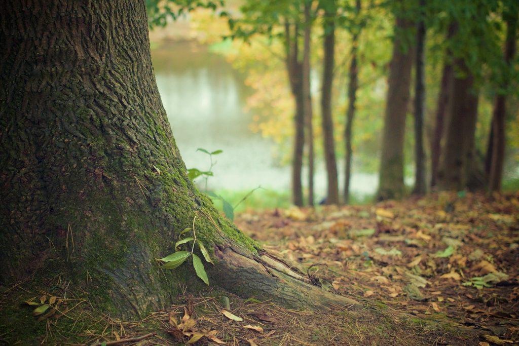 abrazar muchos árboles da energía