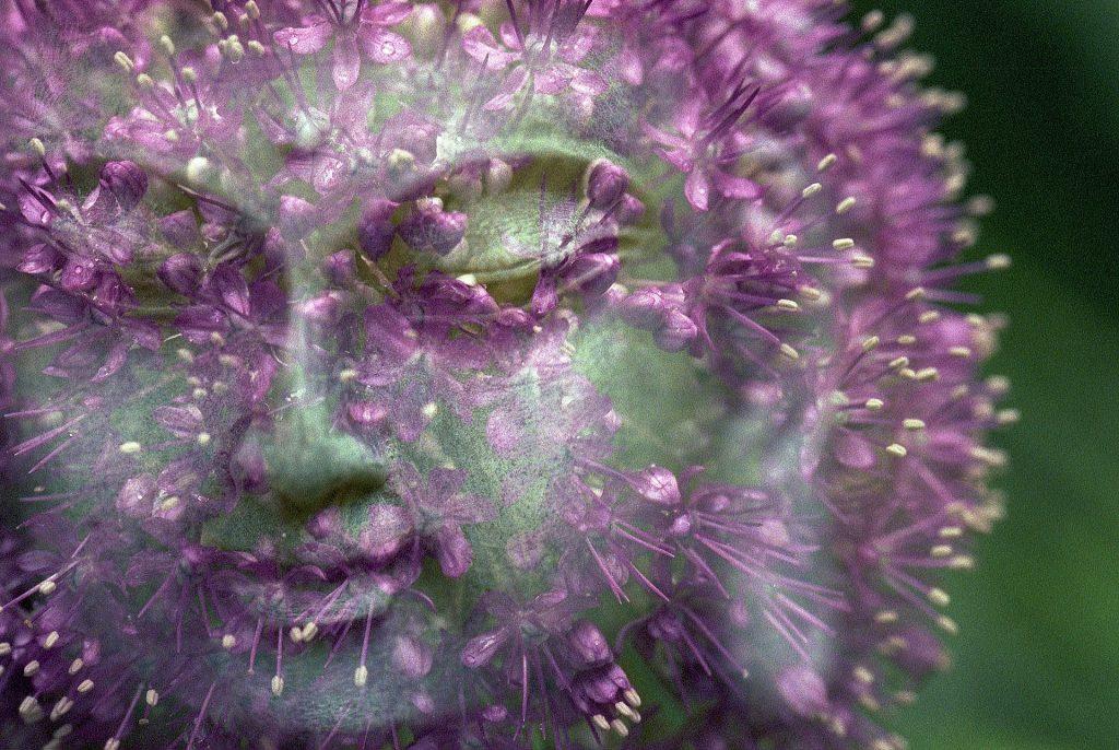 Pensamientos de Buddha