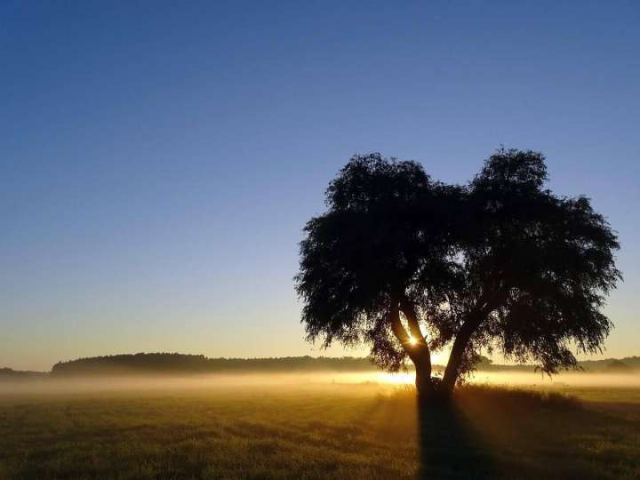 El árbol de los amigos, un gran mensaje para la vida